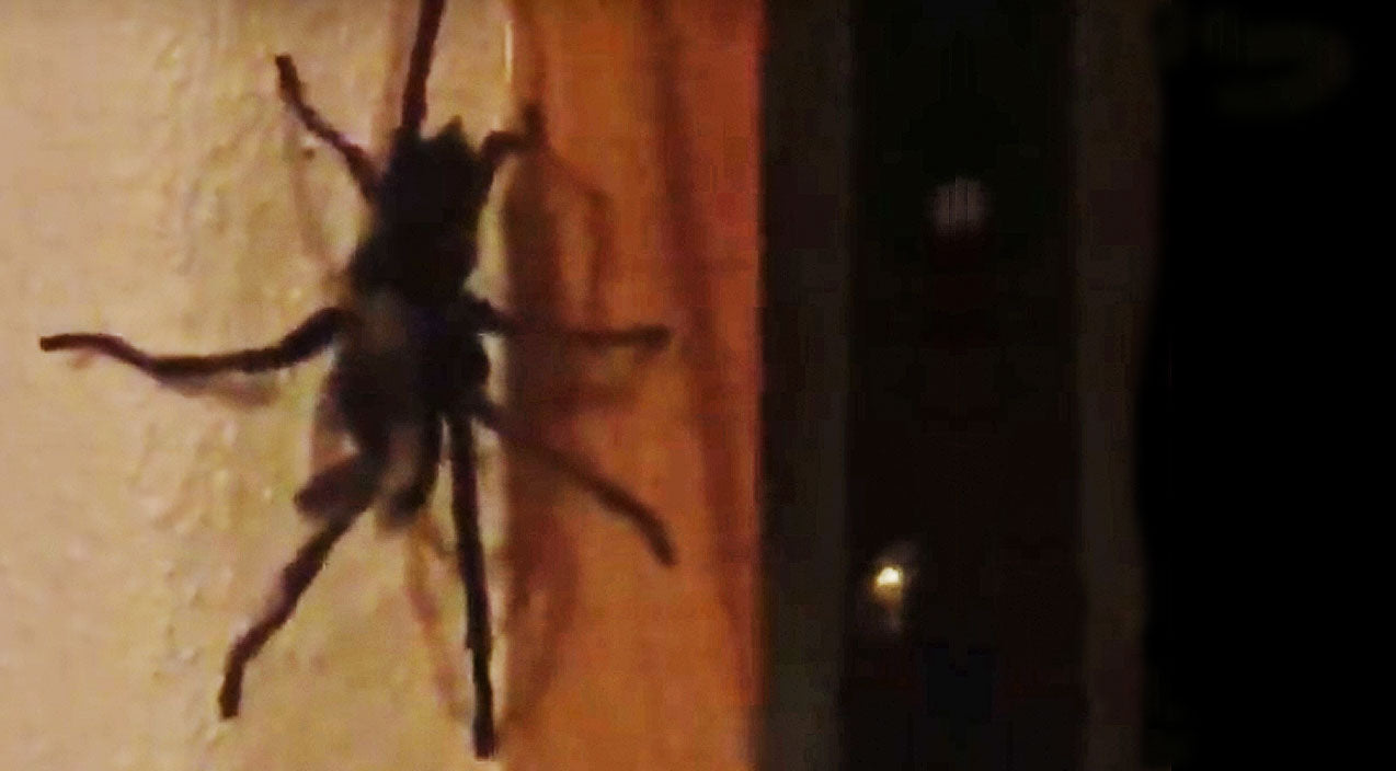Kip moore Songs | Country Star Finds Horrifying Spider In His Room | Country Music Videos