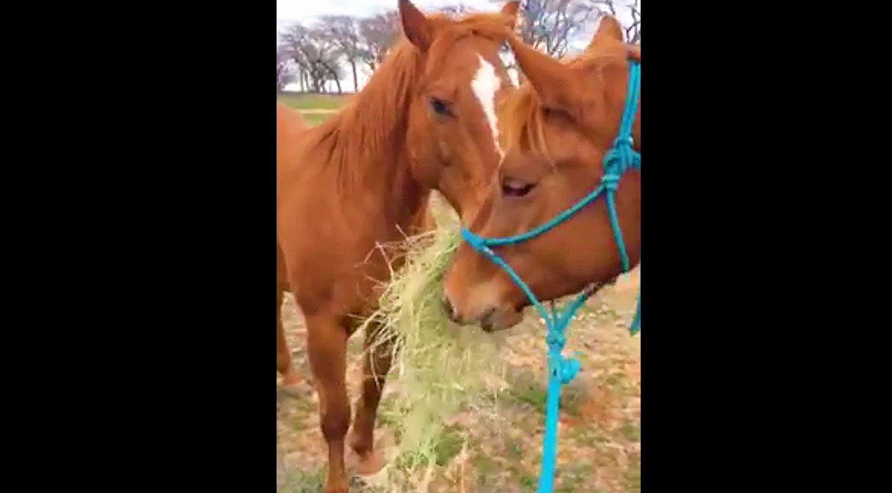 Animals Songs   This Romantic Horse Will Teach You How To Be A Gentleman   Country Music Videos