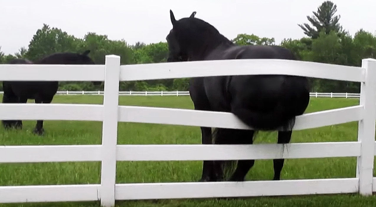 Viral content Songs | Horse's Itchy Butt Hysterically Breaks Fence | Country Music Videos