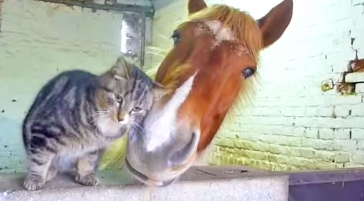 Animals Songs | This Purr-fect Friendship Is Too Cute For Words | Country Music Videos