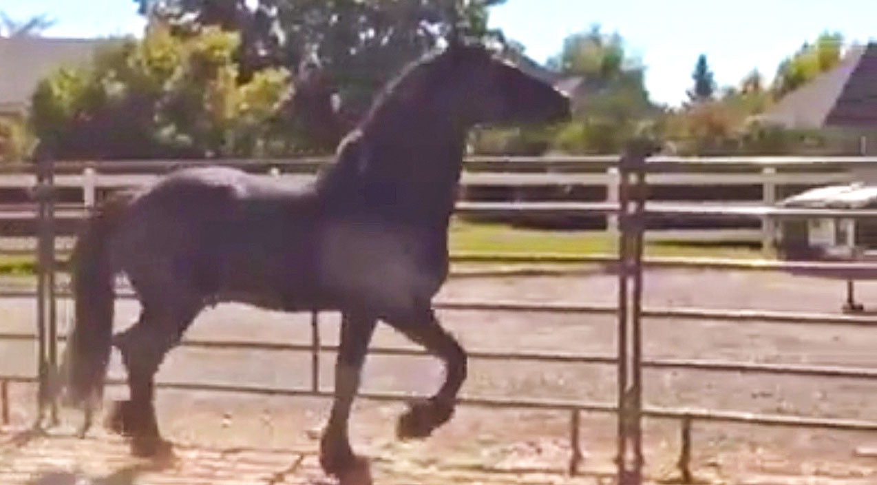 Animals Songs | Horse Spots His Owner Across The Pen, And He CAN'T Contain His Excitement! | Country Music Videos