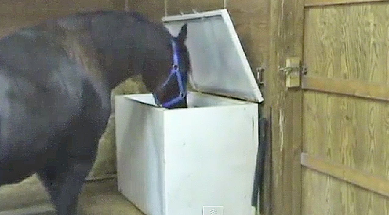 Animals Songs | Horse Kept Escaping From Stall, So Owners Set Up Camera. What Was Found? No Way! | Country Music Videos