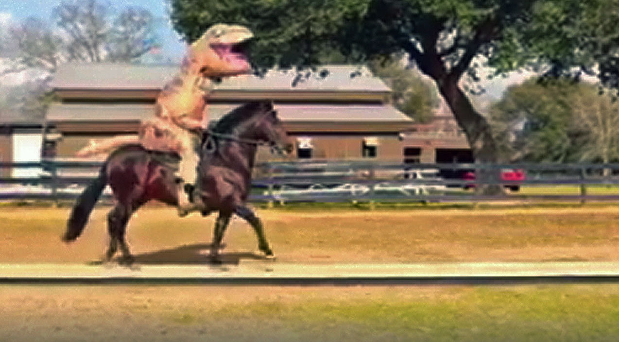 Man In A T-Rex Costume Gets On A Horse, What Happens Next is UNBELIEVABLE! | Country Music Videos