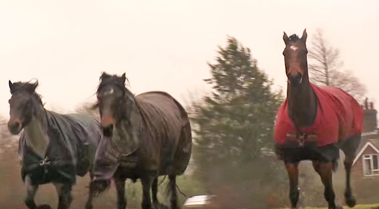 Animals Songs | This Horse Reunites With His Friends, And What Happens Next Will Have Y'all In Tears! (VIDEO) | Country Music Videos