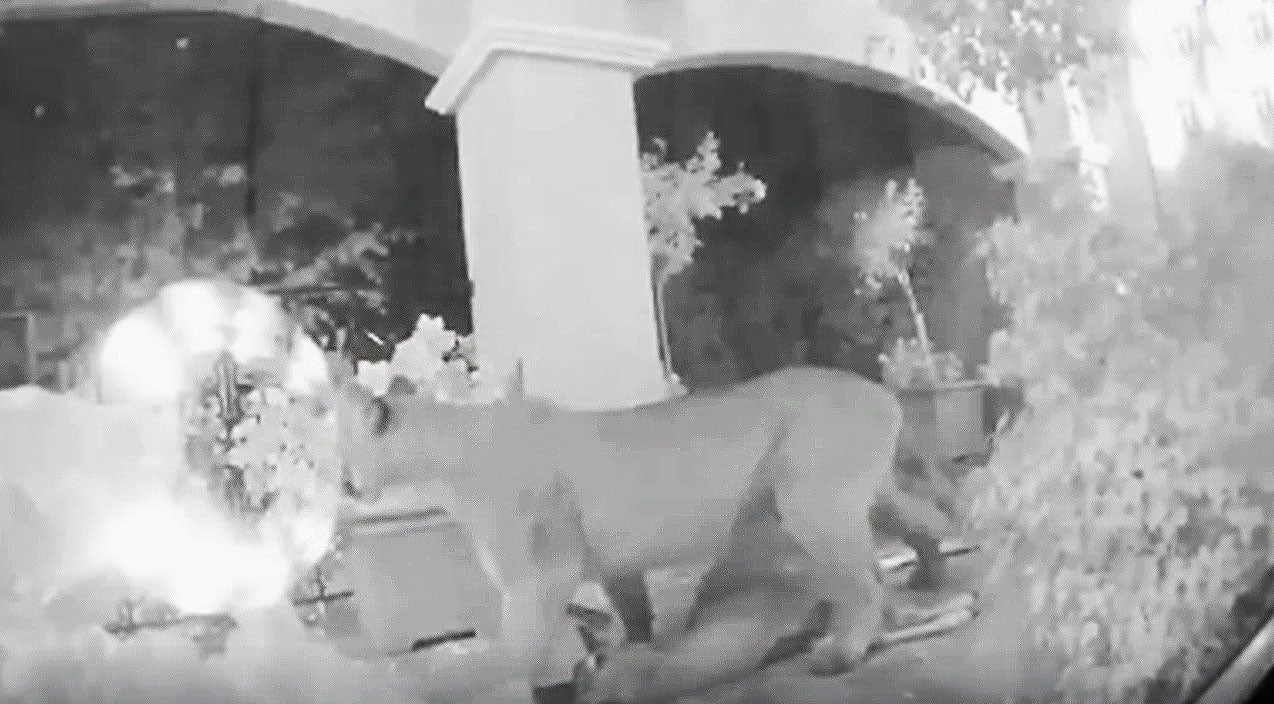 Viral content Songs | Family's Security Camera Captures Chilling Footage Of Mountain Lion's Deadliest Catch | Country Music Videos