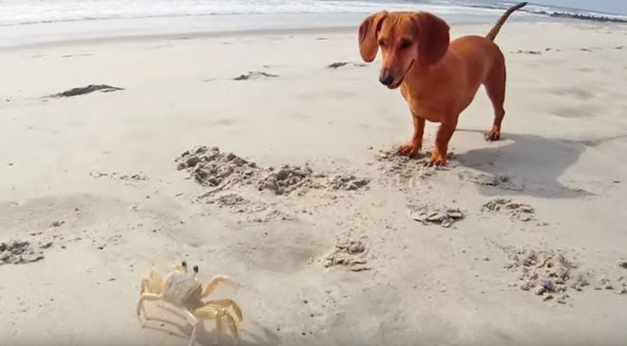 This Puppy Has An Adorable New Friend And You Will Never Guess Who It Is! | Country Music Videos