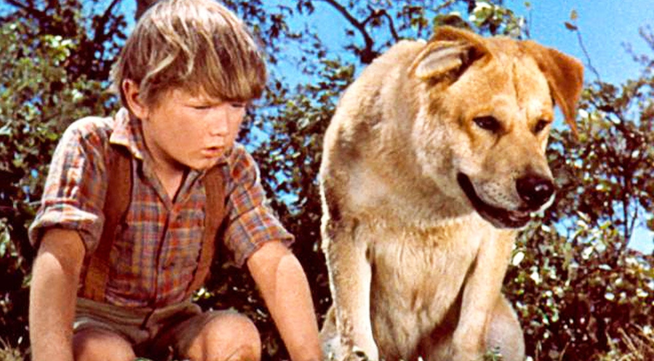 BREAKING: At 66, 'Old Yeller' Actor Kevin Corcoran Has Passed Away | Country Music Videos