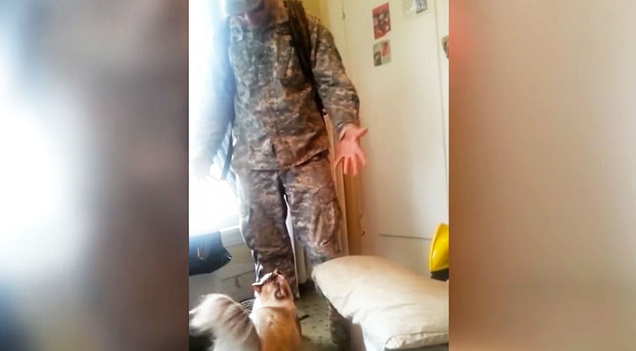 Viral content Songs | Soldier Welcomed Home By Insanely Excited CAT Will Blow Your Mind | Country Music Videos