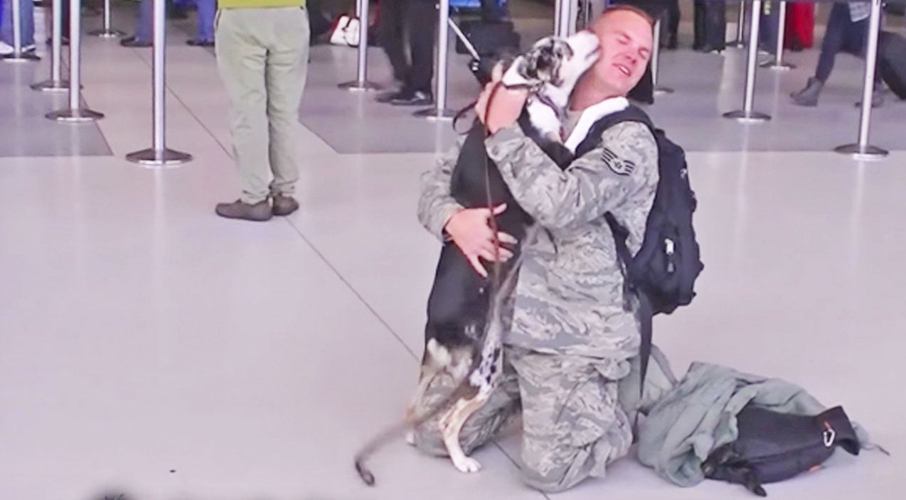 Dogs Greeting Their Heroic Best Friends Will Have You In Tears | Country Music Videos