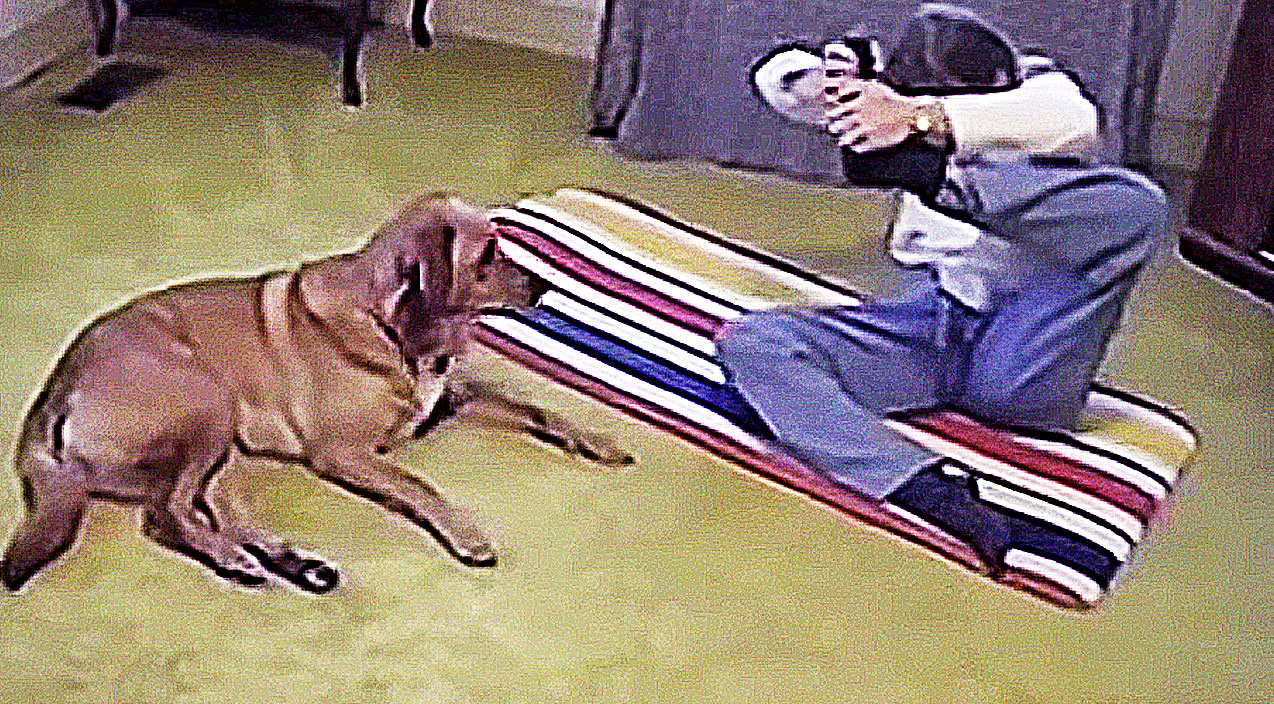 Funny animal Songs   This Incredible Yoga Dog Shows His Owner How Flexible He is, And It's Hilarious!   Country Music Videos