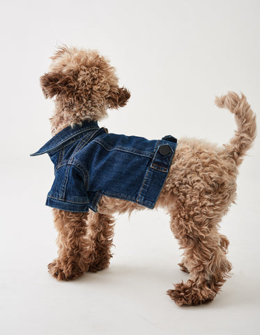 Fido Jacket: Canine Trucker Puppy Breath