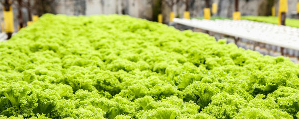 Frequently Asked Questions about Hydroponics - 2019