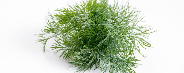 Dill (Anethum graveolens) and its Uses
