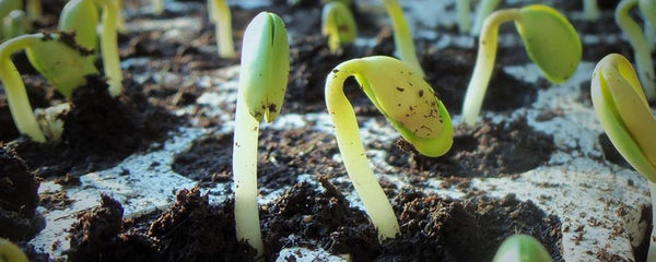 Germinating Instructional