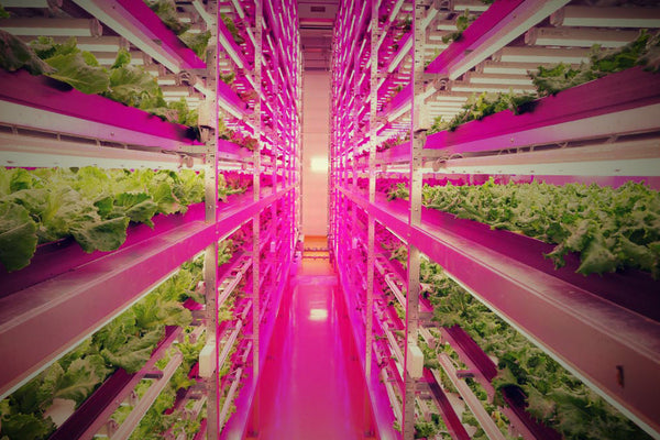 The Basics About Hydroponic Lighting