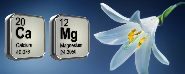 The importance of Cal-Mag (Calcium & Magnesium)