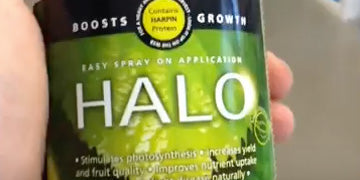Watch - Quick Look at the Halo Harpin Protein