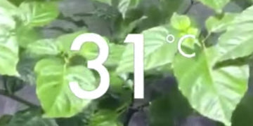 Watch - Coco Coir Compared to Hydroponically Grown Chillis Part - 2