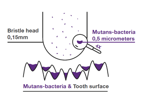 Illustration of bacteria and a toothbrush bristle