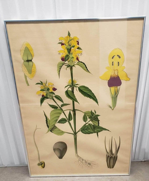 Shop Lendy - Silver Framed Yellow Flower (Botanical Art) - Shop Lendy