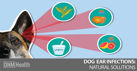 Ear Infections in Dogs and Natural Treatments - – Rocco's Pets