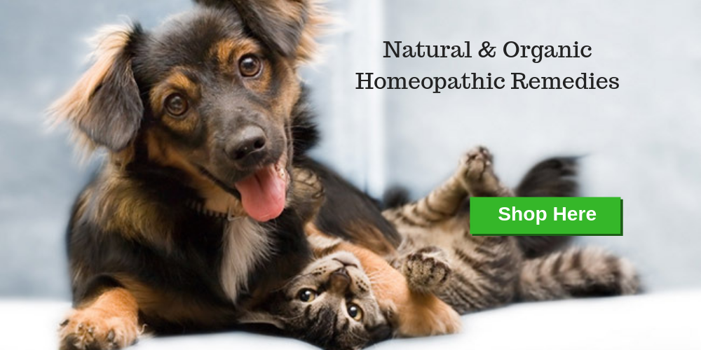 Natural & Organic Pet Remedies Safe Solutions