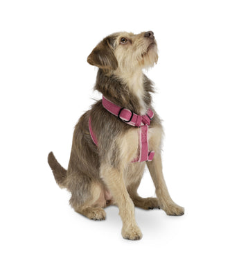 Natural Hemp Fleece-lined Adjustable Harness - Rocco's Pets  - Harnesses - Planet Dog  - 2