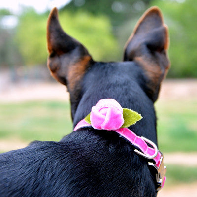 Rosebud Velvet Adjustable Dog Collar - Rocco's Pets  - Collars - Diva Dog Teacup - 1