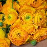 Gold Ranunculus Jumbo 30 Stem Bunch