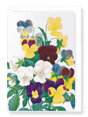 Ezen Designs - Bunch of pansies (detail) - Greeting Card - Front