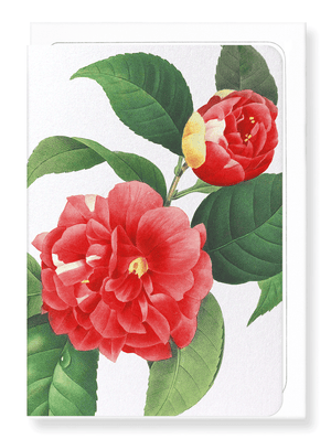 Ezen Designs - Japanese camellia (detail) - Greeting Card - Front