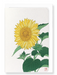 Ezen Designs - Sunflower - Greeting Card - Front
