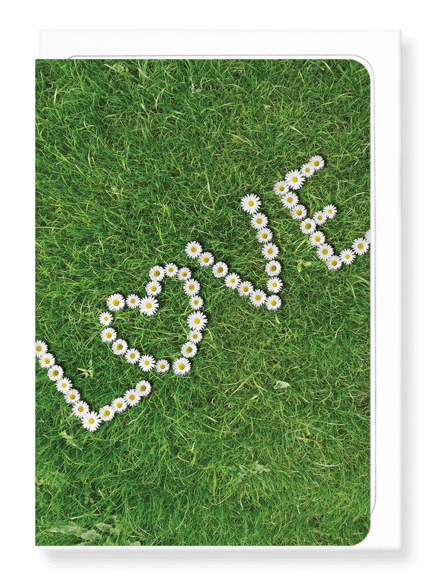 Ezen Designs - Daisy of love - Greeting Card - Front