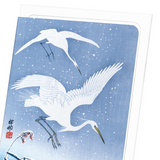 Egrets descending in snow