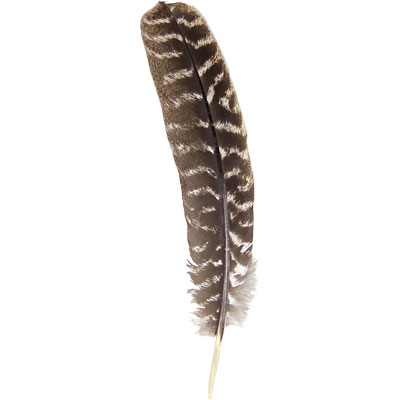 Feather, Turkey