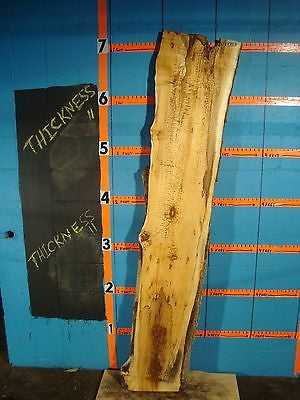 "# 8752,  2 1/16"" thick spalted flaming red box elder Live Edge Slab lumber"