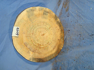 # 6046 thick spalted Austrian pine log slice rustic shelf slab band saw cut