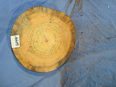# 6044 thick spalted Austrian pine log slice rustic shelf slab band saw cut