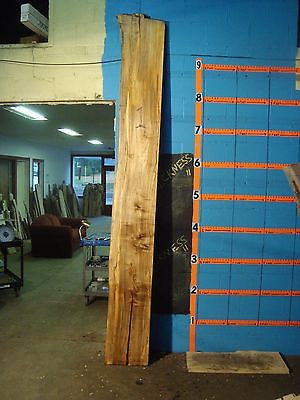 "#1, 1 7/8"" THICK  spalted Maple Live Edge Slab lumber wood"