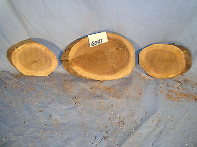 # 6041  3, spalted black walnut log slices rustic shelf slab band saw cut