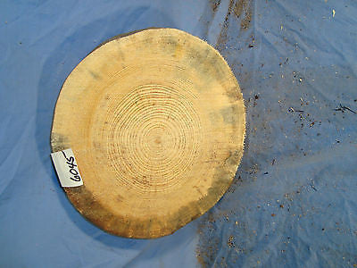 # 6045 thick spalted Austrian pine log slice rustic shelf slab band saw cut