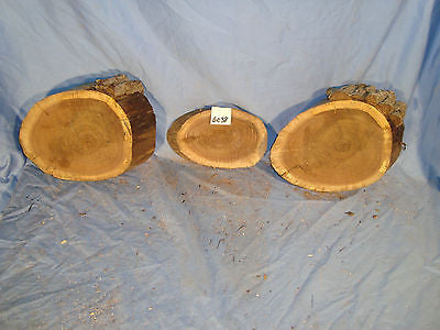 # 6038  3, spalted black walnut log slices rustic shelf slab band saw cut