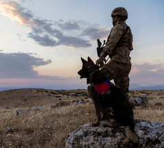 Military war dog and its handler