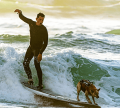 Man and dog surfing over a wave.
