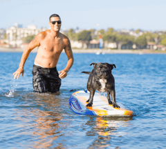 Man training dog to stay on a surfboard in calm water.