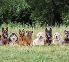 Group of dogs sitting on the grass in a row.