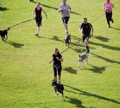People running in a Canicross competition.