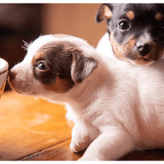 Puppy sniffing a cup
