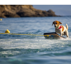 Dog being pulled on board in the water.