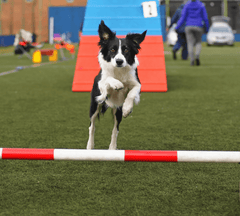 Dog jumping over pole.